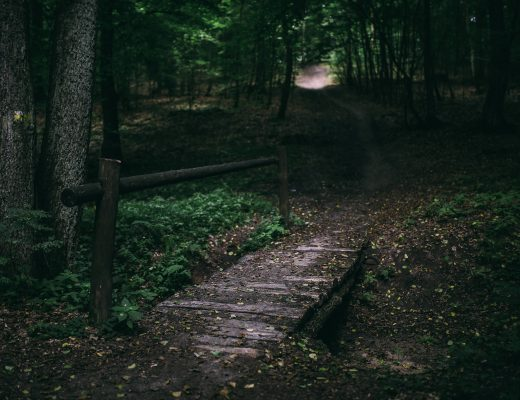 Weg reisen Brücke Natur